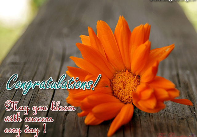 congratulations message for winning - The Greetings